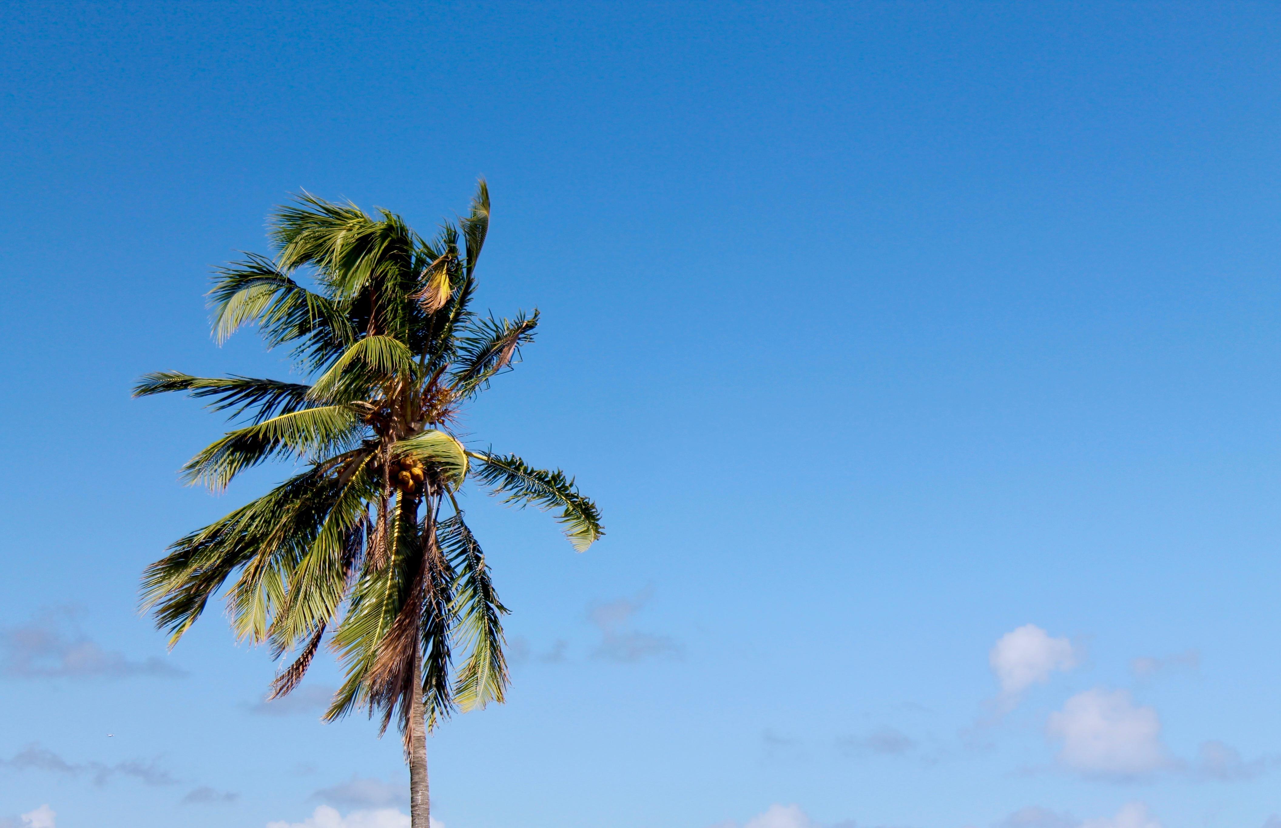 Eine Palme vor blauem Hintergrund